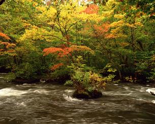 秋の奥入瀬渓流の写真素材 [FYI00492158]