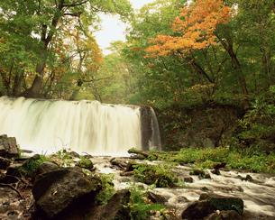 秋の奥入瀬渓流の写真素材 [FYI00492160]