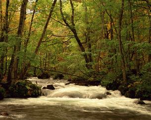 秋の奥入瀬渓流の写真素材 [FYI00492161]
