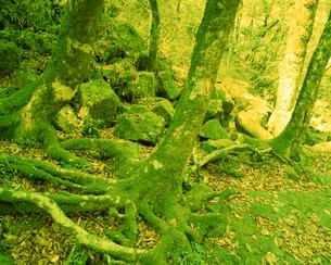 森林の素材 [FYI00492245]