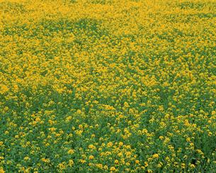 花畑の写真素材 [FYI00492246]