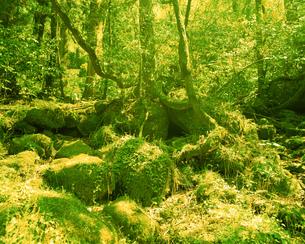 森林の素材 [FYI00492248]
