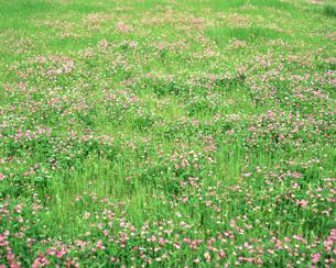 花畑の写真素材 [FYI00492259]