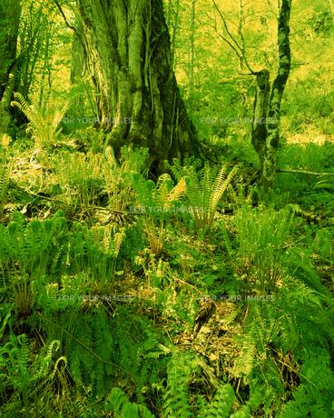 森林の素材 [FYI00492315]