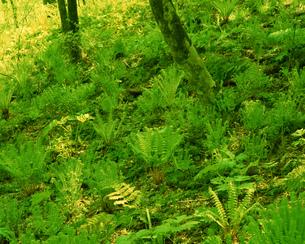 森林の素材 [FYI00492318]