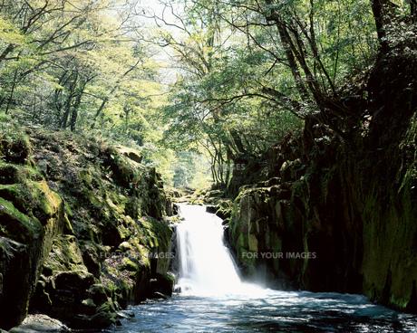滝の素材 [FYI00492353]