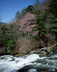川と森林の素材 [FYI00492366]