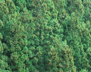 森林の素材 [FYI00492540]