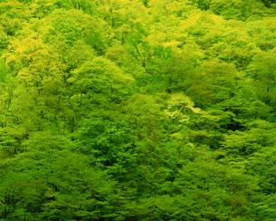 森林の素材 [FYI00492541]