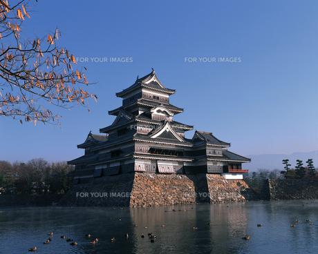 松本城の写真素材 [FYI00492599]