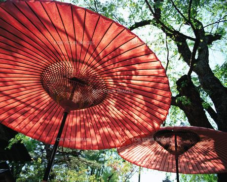 和傘の素材 [FYI00492703]