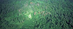 森林 アラスカの素材 [FYI00492838]