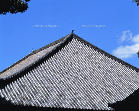 屋根の写真素材 [FYI00492866]