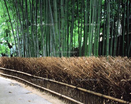 竹林の素材 [FYI00492873]