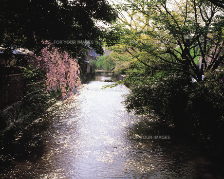 川とシダレザクラの素材 [FYI00492888]