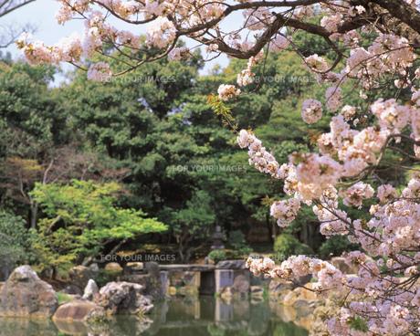 春の風景の素材 [FYI00492891]