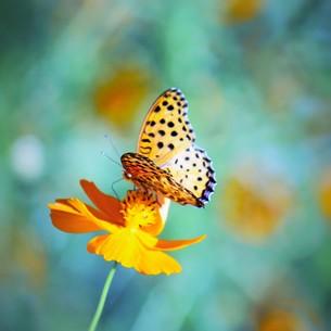花と蝶の素材 [FYI00495757]