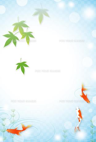 金魚のイメージの写真素材 [FYI00495809]