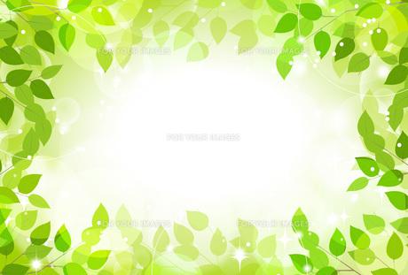 緑の木漏れ日の素材 [FYI00495814]