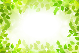緑の木漏れ日の写真素材 [FYI00495814]