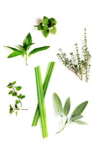 料理やお茶に利用されるハーブの写真素材 [FYI00495877]