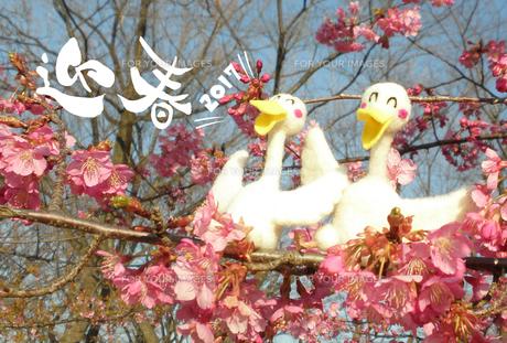 2017年賀状/酉/クラフト/かわいい/アヒル/カップル/寒緋桜/迎春の写真素材 [FYI00495998]