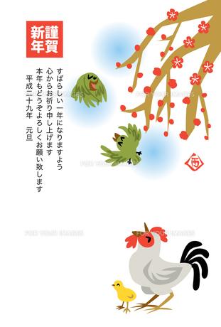 2017年賀状/酉/ニワトリ/ヒヨコ/ウグイス/枝垂れ梅/謹賀新年の写真素材 [FYI00496012]