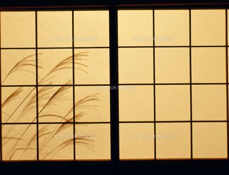 障子とススキの影の写真素材 [FYI00496187]