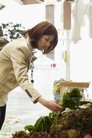 野菜を選ぶ女性の写真素材 [FYI00496336]