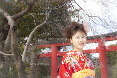鳥居と着物姿の女性 宮城県塩釜市の写真素材 [FYI00496424]