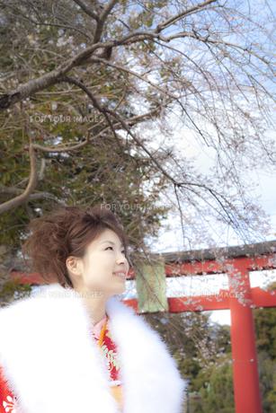 鳥居と着物姿の女性 宮城県塩釜市の素材 [FYI00496425]