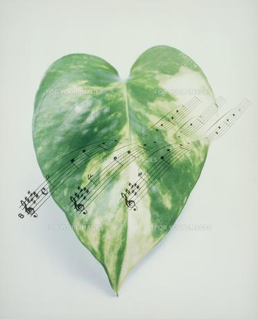1枚の葉と音符の写真素材 [FYI00496517]