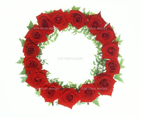 赤いバラのリースの素材 [FYI00496568]