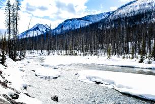 冬のカナディアン・ロッキー クートニー国立公園の川と山並みの写真素材 [FYI00497134]