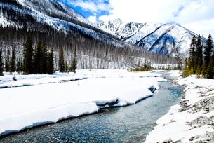 冬のカナディアン・ロッキー クートニー国立公園の川と山並みの写真素材 [FYI00497135]