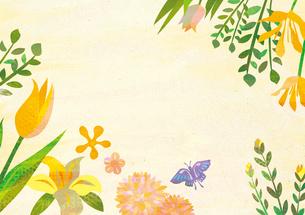 花と蝶々の素材 [FYI00497190]