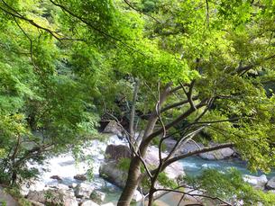 渓谷歩道から見下ろした風景の写真素材 [FYI00497207]
