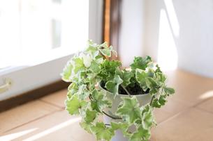 窓際の観葉植物の写真素材 [FYI00497310]