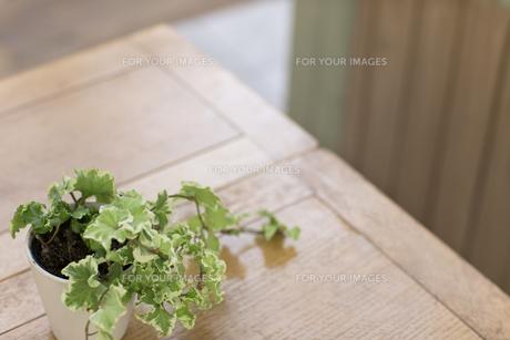 机にある観葉植物の写真素材 [FYI00497325]