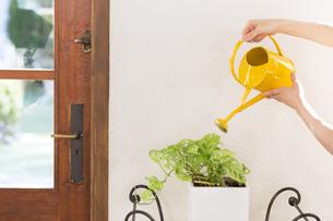植物に水をやる様子の写真素材 [FYI00497327]