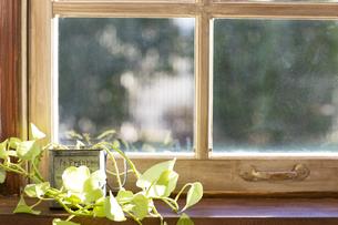 窓際の観葉植物の写真素材 [FYI00497331]