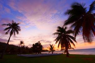 夕暮れ時のリゾートの海と椰子の木の写真素材 [FYI00497481]