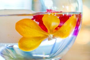 透明なグラスに入ったトロピカルフラワーの写真素材 [FYI00497484]