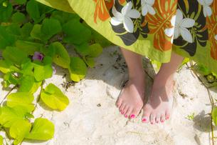 砂浜と女性の足と緑の葉の写真素材 [FYI00497494]