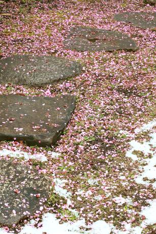 日本庭園の道と積雪と散った梅の花の素材 [FYI00497504]