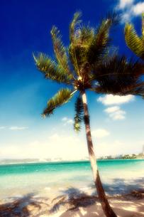 グアム島 タモン湾のビーチと椰子の木の写真素材 [FYI00497512]