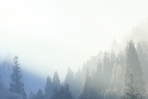 朝霧に浮かぶ木々の写真素材 [FYI00497514]