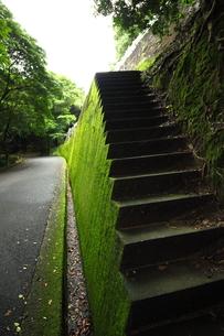 コケの付着した石の階段の写真素材 [FYI00497517]