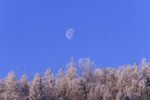 スキー場の朝の様子の写真素材 [FYI00497633]