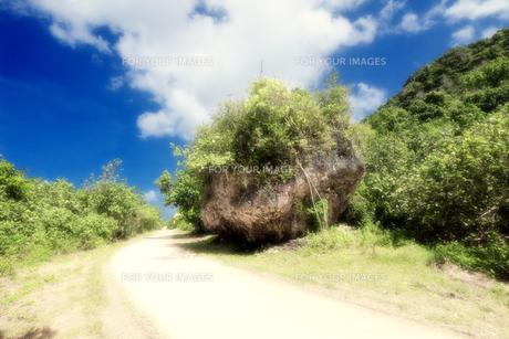 グアム島 道端に転がる巨大な岩の素材 [FYI00497658]